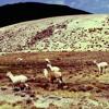 The Shepherd Song