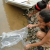 Matéria: Ação de peixamento insere dez mil alevinos em trecho mineiro do São Francisco