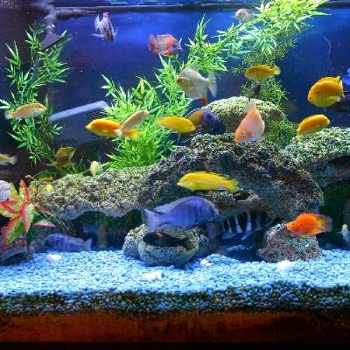 Old Men Stories E199 Aquariums