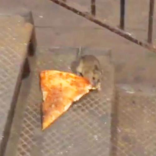 The Jeff Rubin Jeff Rubin Show - The Man Behind Pizza Rat
