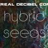 EL NaNO - Hybrid Progressive @ EDC's Hybrid seeds