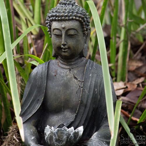 Opening and Balancing the Chakras