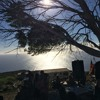 Infx Madhupatra - Pan-o-Rama - Under the Magic Tree - La Gomera
