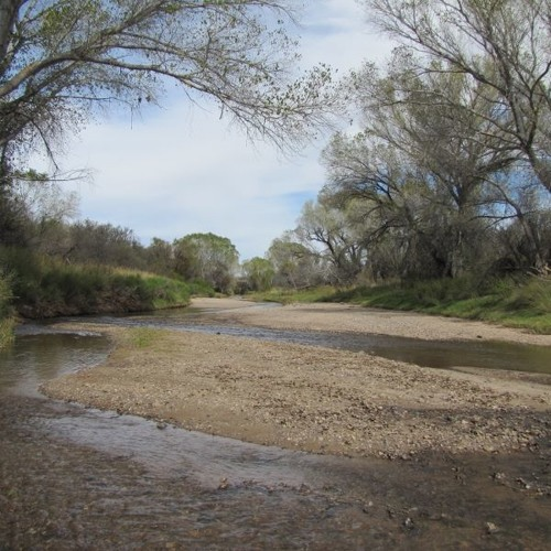 San Pedro River 130412