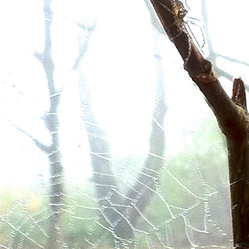 Intricate Web String Quartet No 3
