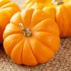 Fall Favorites List