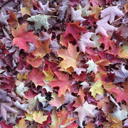 TDYR 272 - The Awesome Autumn Audio of Walking Through Leaves