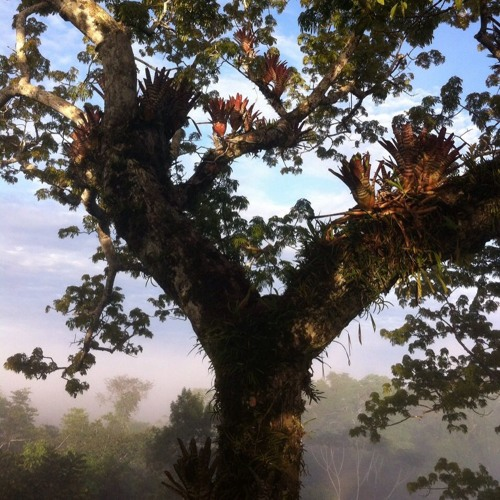 Mariele Neudecker, Figure of 8 (Rainforest, Ecuador) for 5.1 surround, 2015