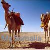 AROOS - QAALI IYO LIBAN JIGJIGA - 2012