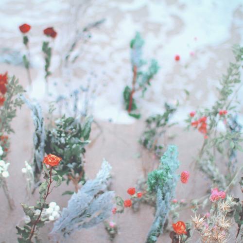 海辺の花屋~Trailer~ / 別野加奈 (TKGR-006)