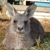 Native Animals: Looking after our 'Buddy'