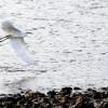 Report finds climate change endangers half of North America bird species