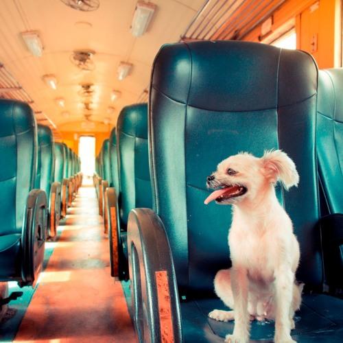 Darf man einen kleinen Hund gratis im Zug mitnehmen?
