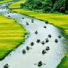 Nguoi Ve Ha Thanh - Ha Thanh