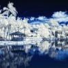 Corint - Tropical Winter