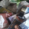 Jazz & Blues on steelpan; 124-year legacy of Macedonia Missionary Baptist Church in Spotlight