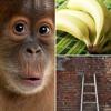 Hogyan írja le társadalmunk működését 5 majom, 1 létra és 1 banán?