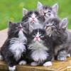 Saya Sudah Punya Banyak Kucing, Bagaimana Caranya Agar Kucing Saya Tidak Bertambah Lagi?