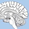 Aggy Brain