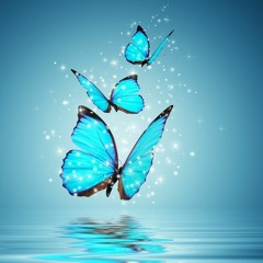 The Voice Of Butterfly