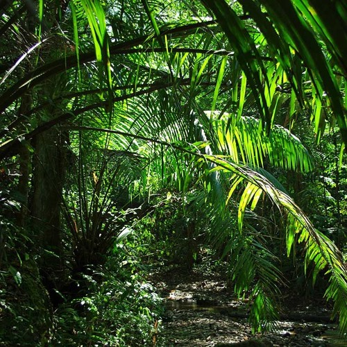 Jungle and dnb mix - BENZI