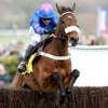 Classy Cue Card And Cooper The Hero
