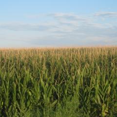 a16z Podcast: Data Down on the Farm