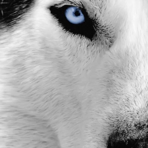 Blue Eyes Blue (Instrumental Cover)