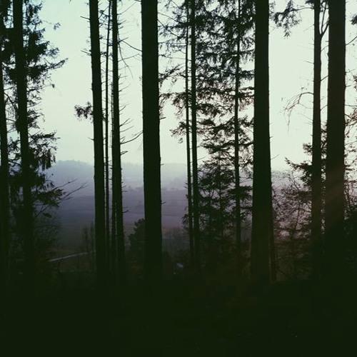 Lost In The Woods - Arina Tara