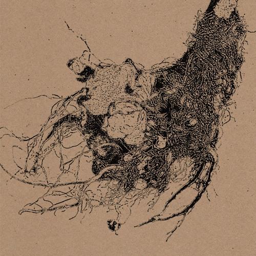 IDO 002 - Michal Wolski - The Root