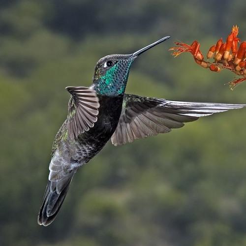 I Colibrì (Hummingbirds) study of micro-intervals for violin solo