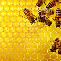 The Science Of: Why humans (and everything else) need bees to survive