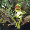 Rainbow Connection (Kermit the Frog Cover)