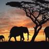 FMT - Mondoantico - free african background music