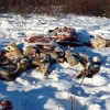 Roger Orr - Caribou Carcasses, Dec 7, 2015