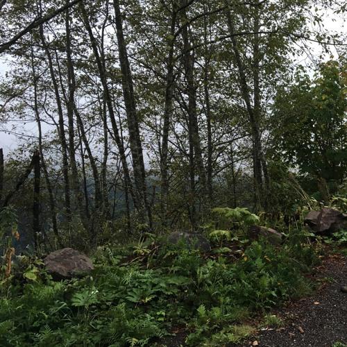 pre-Dawn Quiet on the Beckler Peak Trail