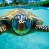 tropical fish ∆