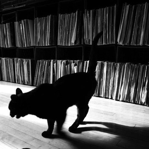 Black Cats (demo)