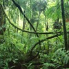 Getorix ✘ Bueg - Jungle Wobbin [Shadow Phoenix Exclusive]