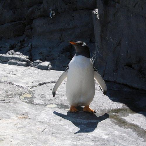 59(penguin)