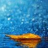 biarkan hujan turun membasahi hati yang kering