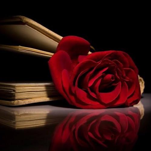 وردة زهرية Beautiful Rose Flowers 2