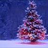 Christmas Day - Dido (Cover)