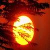 Raisin In The Sun - Produced & Vocals (Autotune) By DJ Gosh Fire