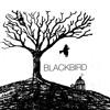 Blackbird [The Beatles cover]