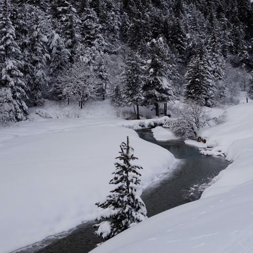 A Winter's Wish