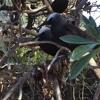 Bird songs on Heron Island