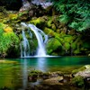 Pertile - O som da natureza