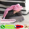شيله رح عاد دورها كلمات  مشيل الصعصاع  اداء عبدالرحمن بن صالح الحان سعد محسن