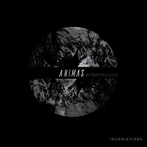 Protocluster - Animas Ep